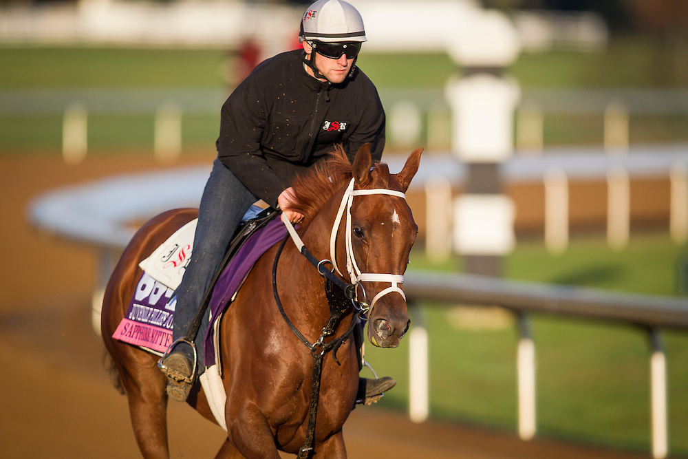 October 29, 2015:   Sapphire Kitten, trained by Joe Sharp and owned by Kenneth L. and Sarah K. Ramsey, exercises in preparation for the Breeders' Cup Juvenile Fillies Turf at Keeneland Race Track in Lexington, Kentucky. Alex Evers/ESW/CSM