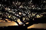 The sunrise greets an early riser tucked about a tree along Hilo Bay on the Big Island, Hawaii.