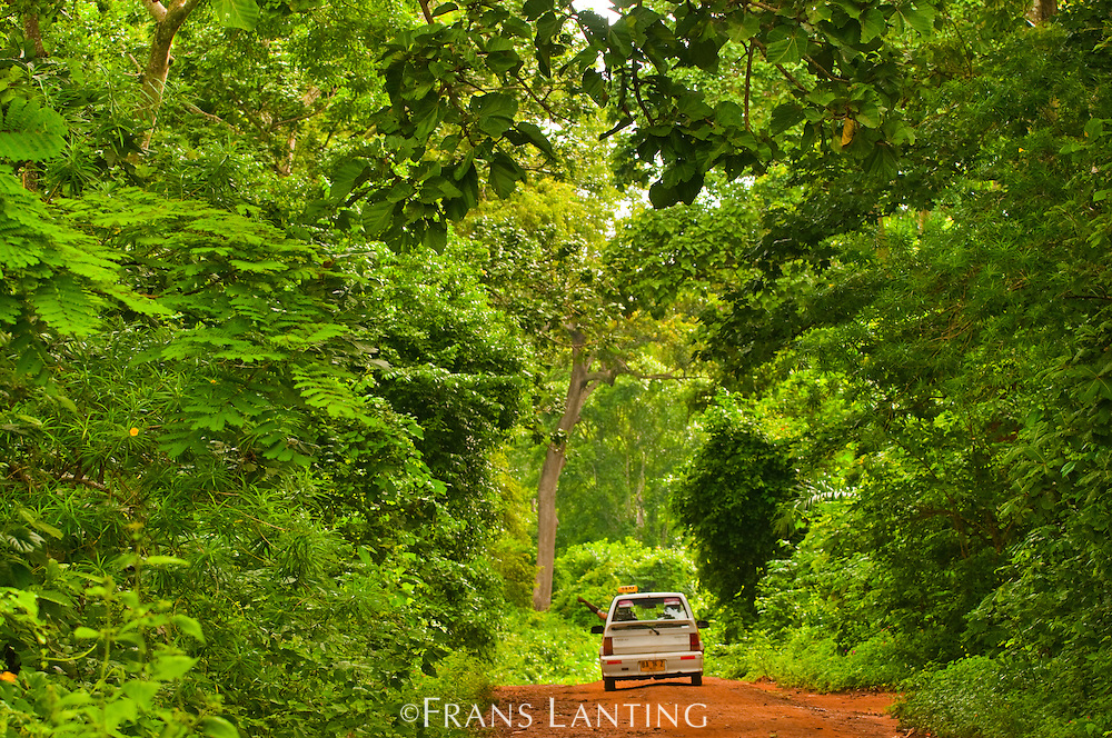 Car on road in forest, Boabeng-Fiema Monkey Sanctuary, Ghana
