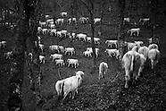 The last Transhumance