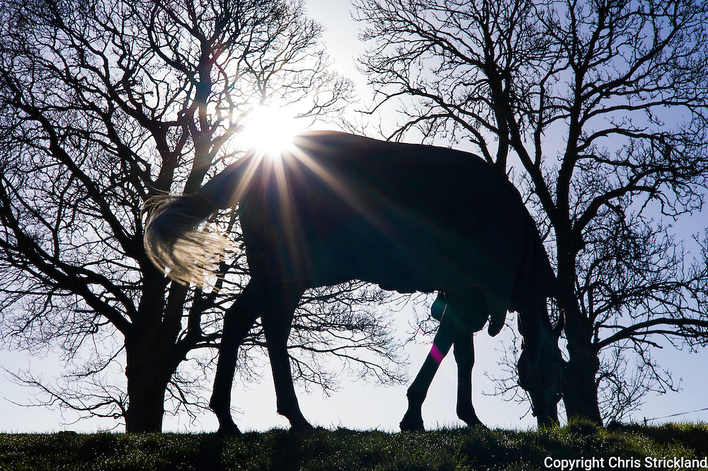 Oxnam, Jedburgh, Scottish Borders, UK. 19th April 2016. Racehorses Giacometti and Probably George enjoy the morning sunshine on a glorious spring morning in the Scottish Borders.