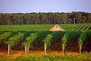 Vineyards North Fork hi rez