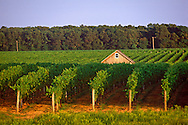 New York, Macari Vineyard, Mattituck, Long Island, North Fork, Barn