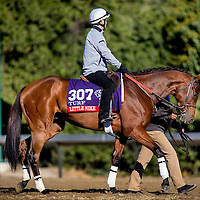 Little Mike trains for the Breeders' Cup Turf at Santa Anita Park in Arcadia, California on October 31, 2013. (Alex Evers/ Eclipse Sportswire)