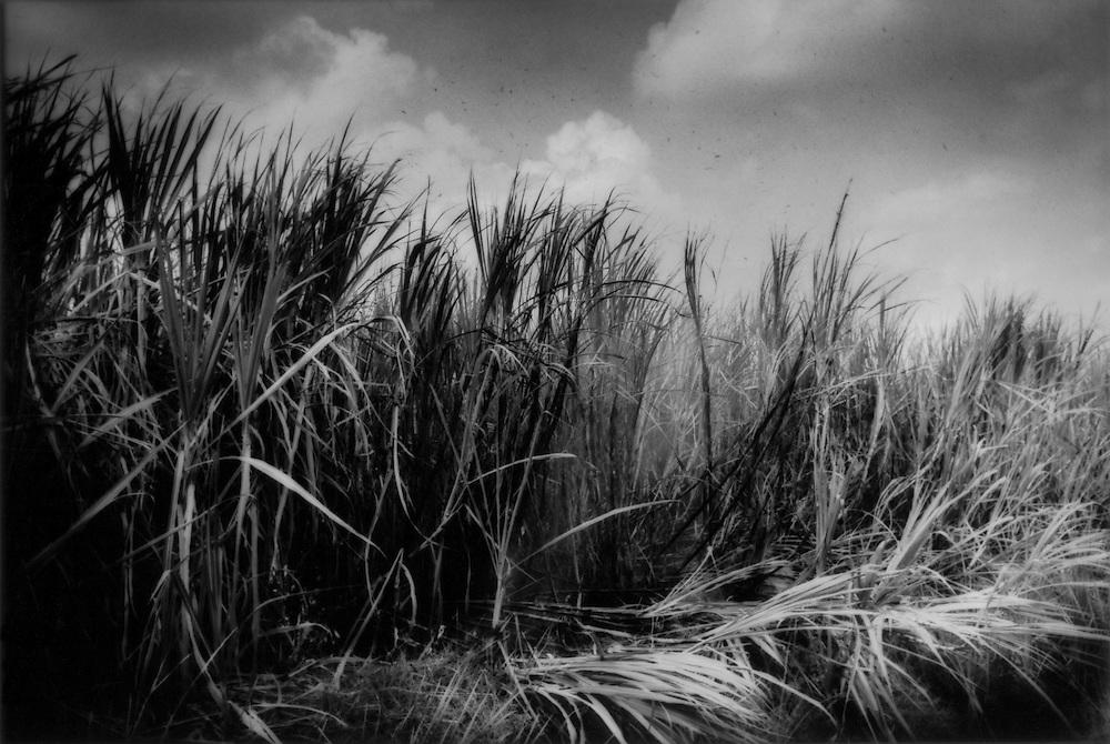 Ash floates skyward from a sugar cane field near Barahona, Dominican Republic.