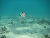 Underwater picture of fish