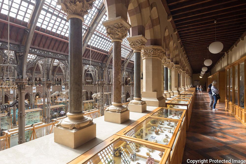 British Natural Hisotory Museum Pillars