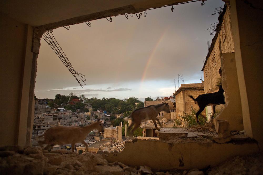 Goats on a hillslide heavily damaged by the January 2010 earthquake.
