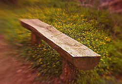 soft focue forest walkway trail wooden log bench for weary hikers.