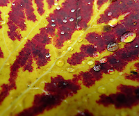 autumn coulors