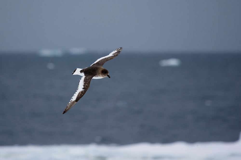 February 24th 2007. Ross Sea. Southern Ocean.