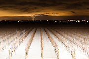 Looking south at night across the Jackson Triggs vineyard.  January 14, 2012. © Allen McEachern.
