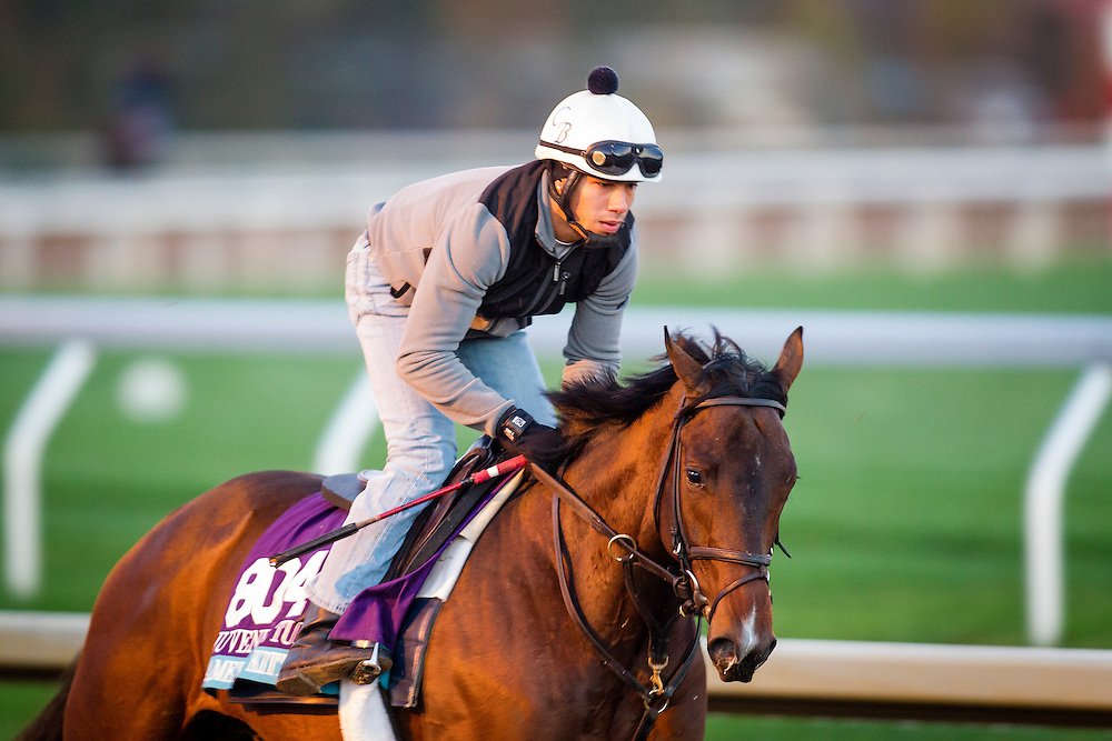 October 29, 2015:  Camelot Kitten, trained by Chad C. Brown and owned by Kenneth L. and Sarah K. Ramsey, exercises in preparation for the Breeders' Cup Juvenile Turf at Keeneland Race Track in Lexington, Kentucky Alex Evers/ESW/CSM