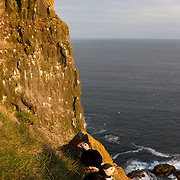 A pair of Atlantic puffins share a ledge high above the Atlantic Ocean in Látrabjarg, Iceland. Látrabjarg, 14 kilometers (8.5 miles) long and up to 440 metres (1,444 feet) high, is Europe's largest bird cliff. About 60 percent of all Atlantic puffins breed in Iceland.