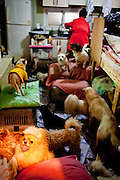 A woman living with about 30 dogs in a little house inside a dog asylum close to the Korean capital Seoul.