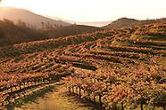 Somerston Wine Co -  Napa Vineyard