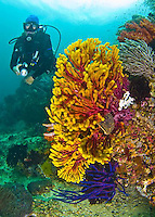 Images from beautiful Triton Bay in East Indonesia near Raja Ampat.
