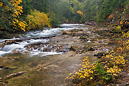 The Little Qualicum River and some great Fall colours at Little Qualicum Falls Provincial Park in the Nanaimo Regional District, British Columbia, Canada