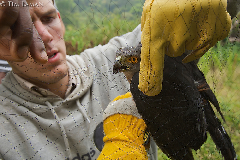 Jake Owens measuring and releasing a mist-netted African Goshawk.