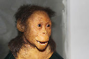 Ethiopia, Addis Ababa, the National Museum, Selam, the first child Australopithecus afarensis (3.3 million years)