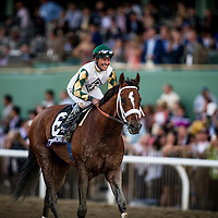 Mucho Macho Man, ridden by Gary Stevens wins the Breeders' Cup Classic on November 2, 2013 at Santa Anita Park in Arcadia, California during the 30th running of the Breeders' Cup.(Alex Evers/ Eclipse Sportswire)