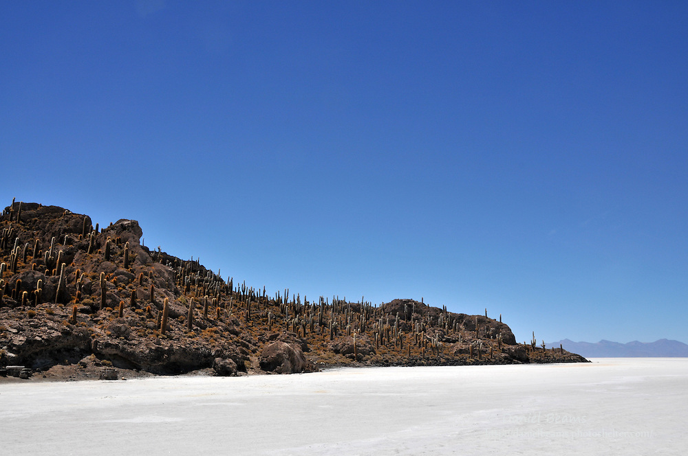 Fish Island, Inca Huasi, on the Salar de Uyuni, Bolivia