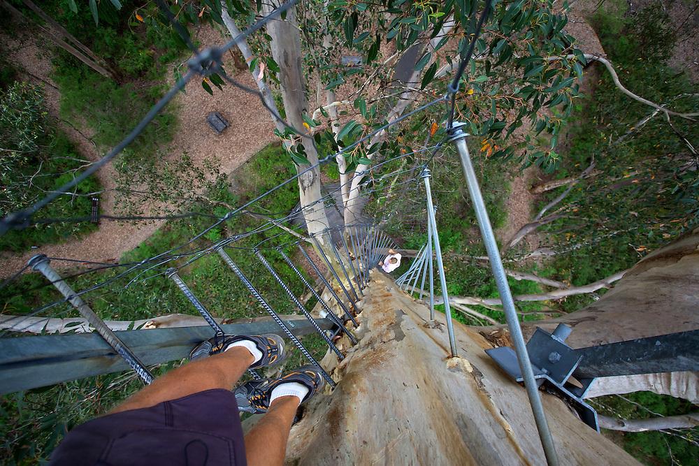 Gloucester Australia  city pictures gallery : tourism attractions gloucester tree australia australia gloucester ...