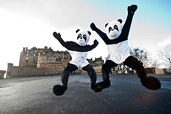 At Edinburgh castle..The Scottish Sun's two pandas visit Edinburgh to see the sites..Pic © Michael Schofield.
