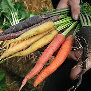 Agrisjå, landbruksmessa i Stjørdal. Forøksringen i Stjørdal og omegn satser på nye grønnsaker, blant annet gulerot i flere fargevarianter og svart nepe.