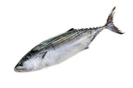 Photo of tuna fish isolated on white background. Available in different sizes under RF licence.