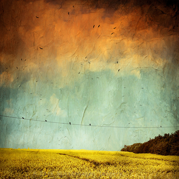 Painterly canola field in bloom with a flock of birds.<br /> Texturized photograph<br /> Society6 products: http://society6.com/product/canola-spring_print#1=45
