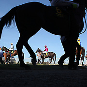 A Day at the Races...Invercargill, New Zealand