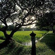The view at sunrise from the Broad Walk across the chequer board rice paddy towards the Water Garden, Geoffrey Bawa's garden, Lunuganga.<br />