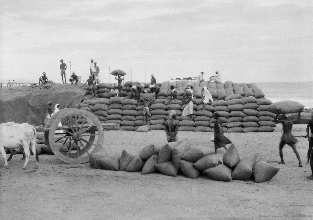 Ground Nut Sorting, Pondicherry, India, 1929