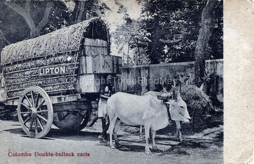 Colombo Double Bullock Cart carrying Lipton Tea.<br /> Old postcard