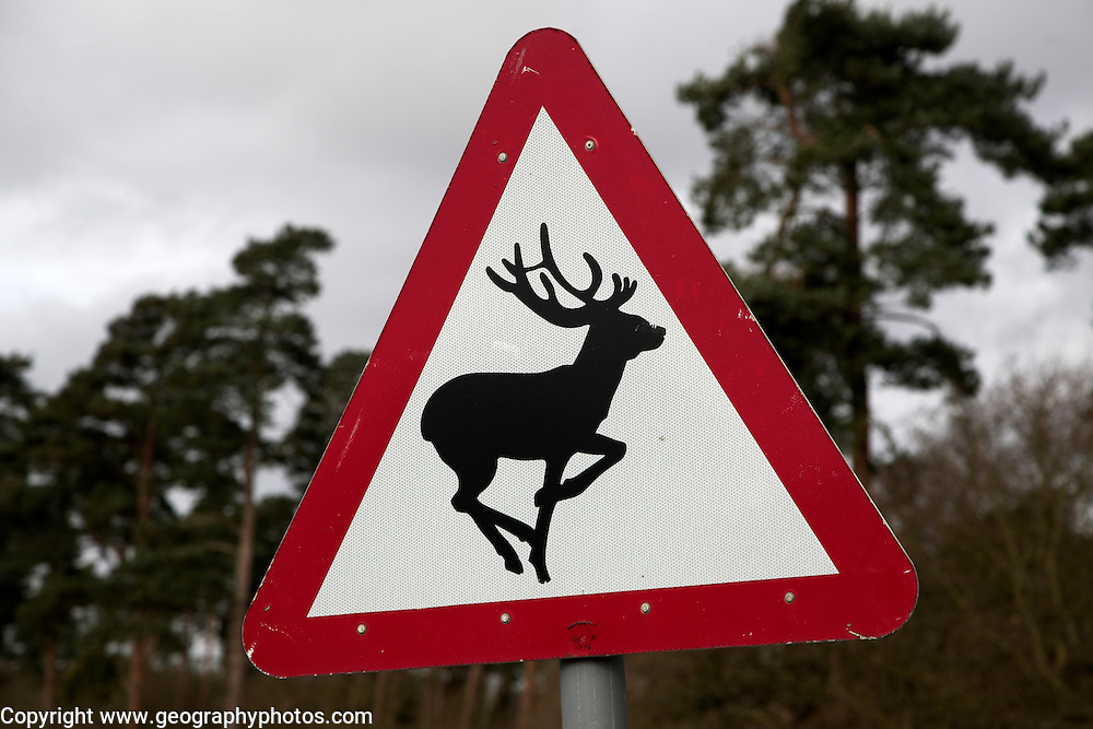 Deer Warning Red Triangle Road Sign Geographyphotos