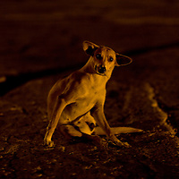 Itchy dog in Cartagena, Colombia ..Photo by Robert Caplin..
