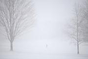 Snow Storm in Prospect Park, Brooklyn, NY. December 25 2010.