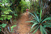 356201-1024 ~ Copyright:  George H. H. Huey ~ Hiker exploring the Yawzi Point Trail with large agaves and cactus, southeast coast of St. John Island, U.S. Virgin Islands National Park. Caribbean. Release #127