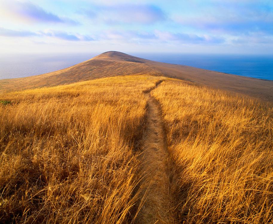 0603-1036 ~ Copyright:  George H. H. Huey ~ Trail near Signal Peak with North Peak in distance.  Summer, Santa Barbara Island.  Channel Islands National Park, California.