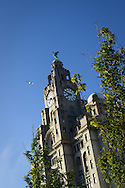 The Liver Building near the waterfront in Liverpool, Britain.