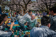 """As o-hanami (""""flower viewing"""") goes on, and the alcohol consumption progresses, things tend to get wilder in parks throughout Tokyo.  Yoyogi Park, Tokyo, Japan."""