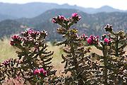 Cholla, Howard, Colorado,