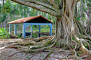 Boat house and tree in Parque Nacional la Guira, Pinar del Rio Province, Cuba.