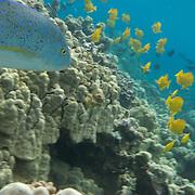 Hawaiian sea life photography.