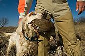 Chukar Hunting Stock Photos