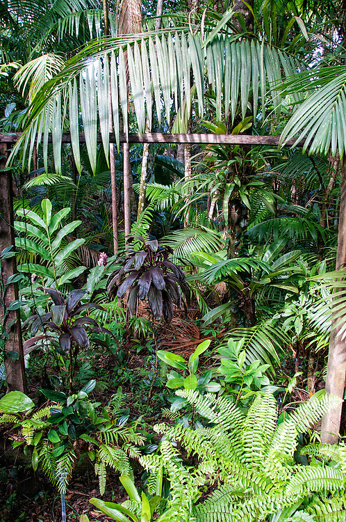 The Botanical Garden of Guyane, Macouria, French Guiana is filled with plants from the region and beyond.