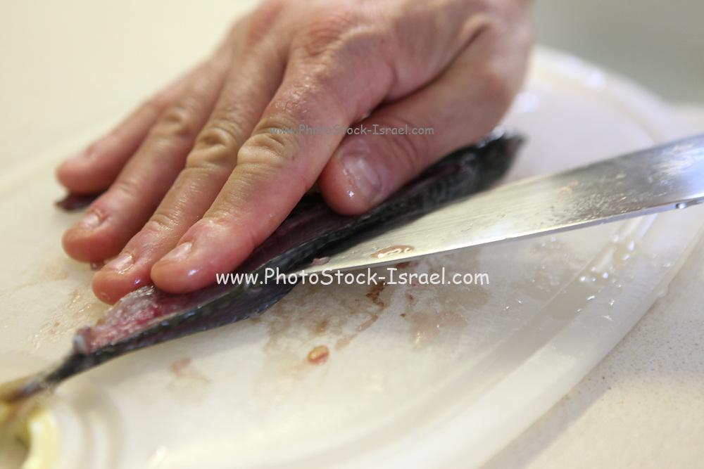 Chef filleting mackerel