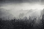 Rising mist and sunrise in a rural landscape - texturized black and white conversion