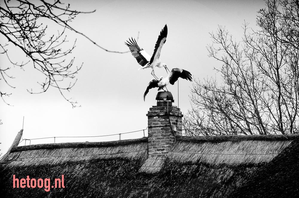 Waar: Wildenberg/Averreest Wat: Nesteldrang Wanneer: 29-03-2009 12:06